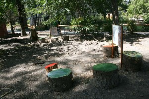 Painted Stumps, Nest Making Stations and a new ditch, dam and mud pit.